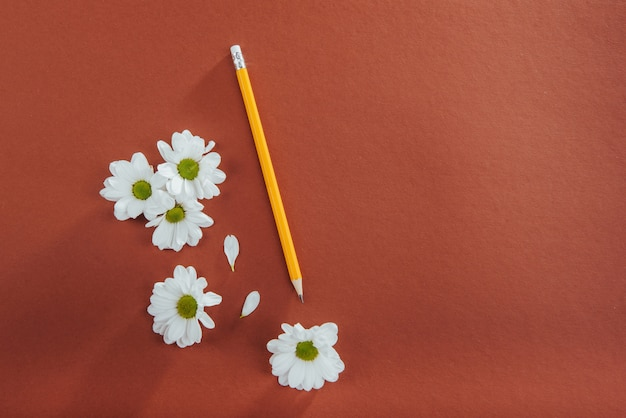 Белые цветы и карандаш на коричневом