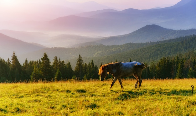 高地の牧草地で草の上の馬