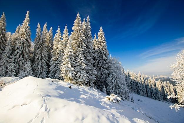 Заснеженные деревья в горах