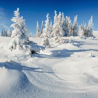 雪に覆われた冬の風景の木