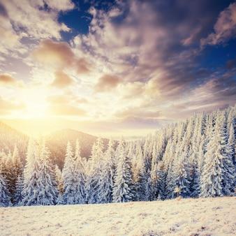 幻想的な冬の風景です。山の魔法の夕日は凍るような日です。休日の前夜。ドラマチックなシーン。カルパチア、ウクライナ、ヨーロッパ。明けましておめでとうございます