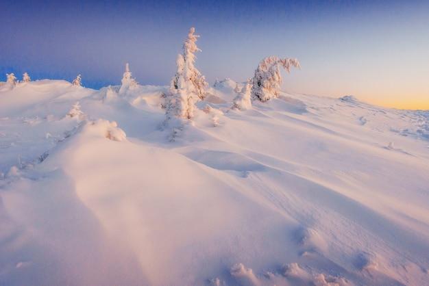 ウクライナの山の幻想的な冬の風景