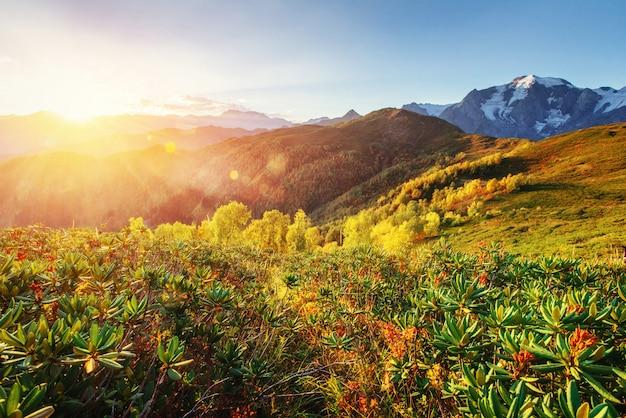 秋の風景と雪をかぶった山頂。カルパティア山脈。ウクライナ。ヨーロッパ