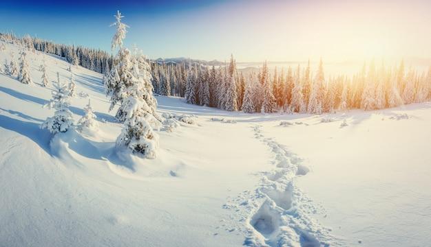 日没。休日を見越して。カルパチア、ウクライナ、ヨーロッパ