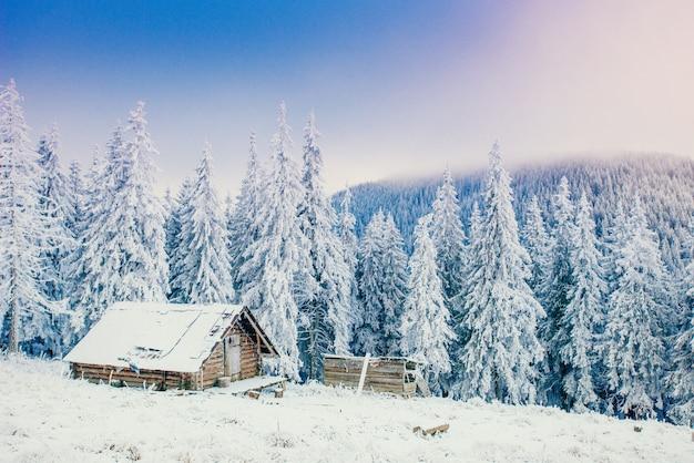 雪に覆われた木の冬の風景