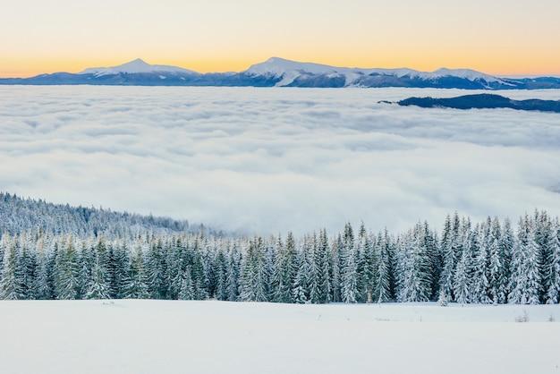 冬の山の霧。幻想的な夕日。カルパティア山脈ウクライナ