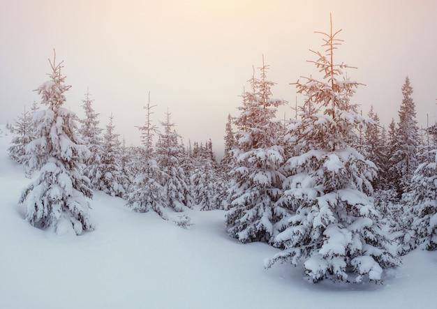 霜の冬の風景の木