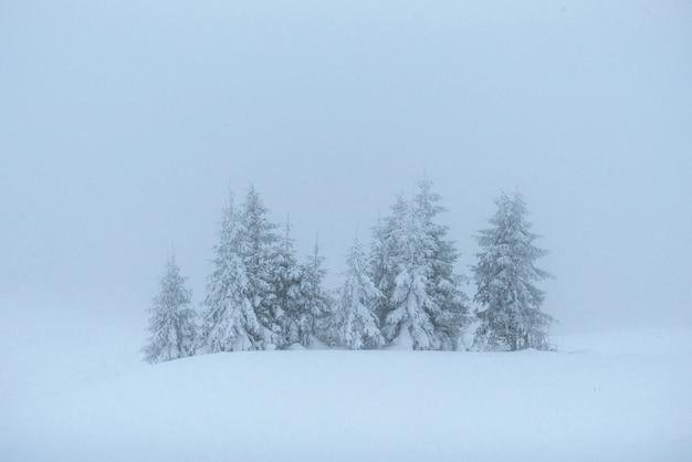 幻想的な冬の風景です。休日の前夜。ドラマチックなシーン。カルパチア、ウクライナ、ヨーロッパ。明けましておめでとうございます