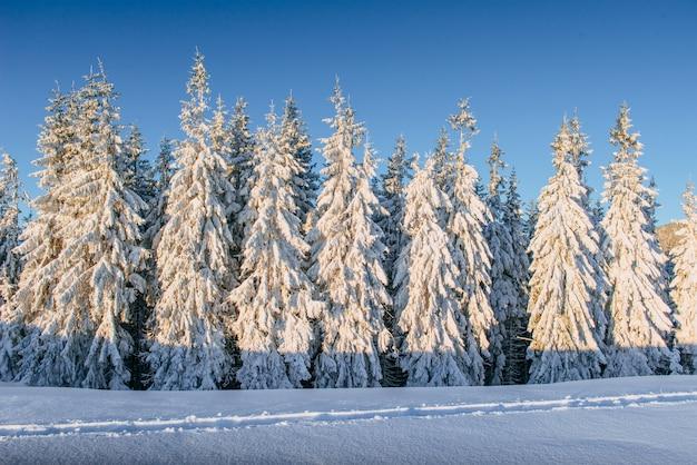 神秘的な冬の風景冬の雄大な山々。魔法の冬の雪に覆われた木。山の冬の道。