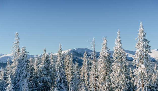 神秘的な冬の風景冬の雄大な山々。魔法の冬の雪に覆われた木。
