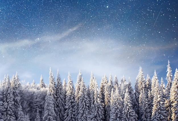 Волшебная зима заснеженного дерева. зимний пейзаж