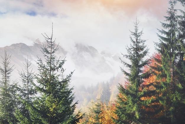 Утренний туман ползет обрывками по осеннему горному лесу, покрытому золотыми листьями. снежные вершины величественных гор на заднем плане