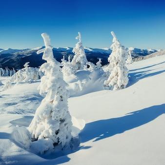Фантастический зимний пейзаж и дерево в иней.
