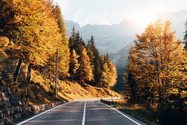 Желтые цветные осенние листья. горная дорога в солнечный день. пейзаж с деревьями и холмами. красивая природа