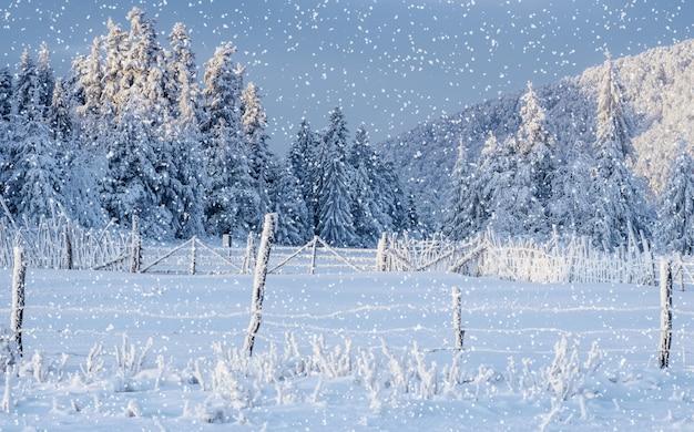 冬の風景の木と霧氷のフェンス
