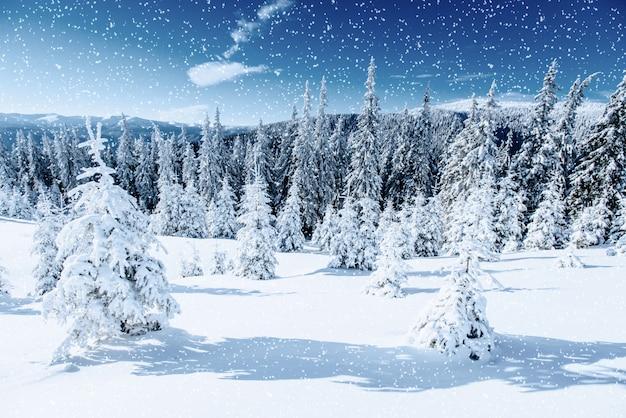 Зимнее дерево в снегу. карпаты, украина, европа. боке свет эф