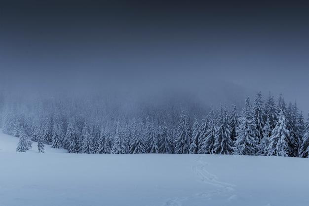 Величественный зимний пейзаж, сосновый лес с деревьями, покрытыми снегом.