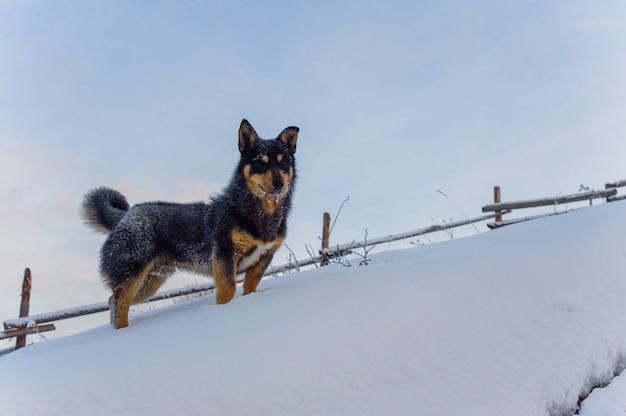 冬の幸せな子犬