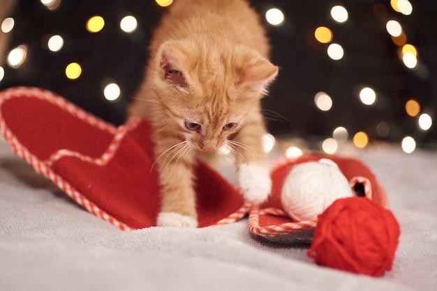 Рождественская картинка с милой рыжей кошкой разноцветных огней на заднем плане