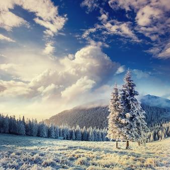 魔法の冬の雪は、カルパティア山脈のツリーをカバーしました。ウクライナ