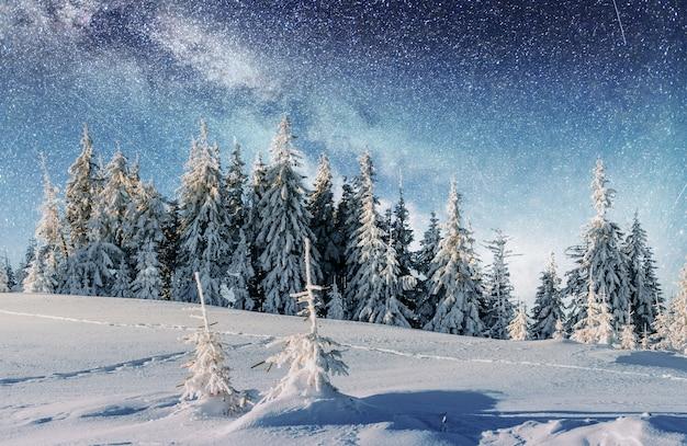 冬の森の乳製品スタートレック。
