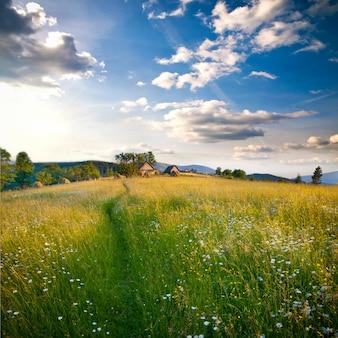 カルパティア山脈の美しいフィールド