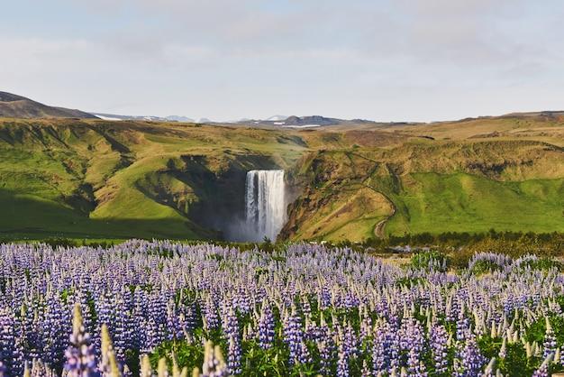 アイスランドの森林と山の絵のような風景。夏に咲く野生の青いルピナス。最も美しい滝