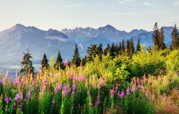 山の夕暮れ時の野生の花。