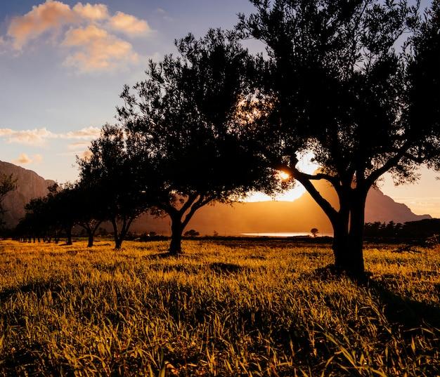 木々の間の夕日