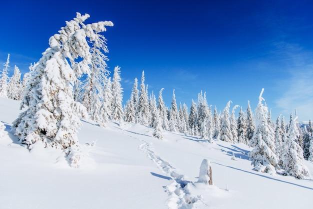 幻想的な冬の風景、階段、山。カルパティア、ウクライナ、ヨーロッパ。