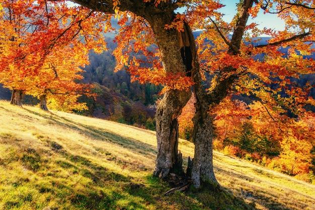 秋の風景の中の林道。ウクライナヨーロッパ