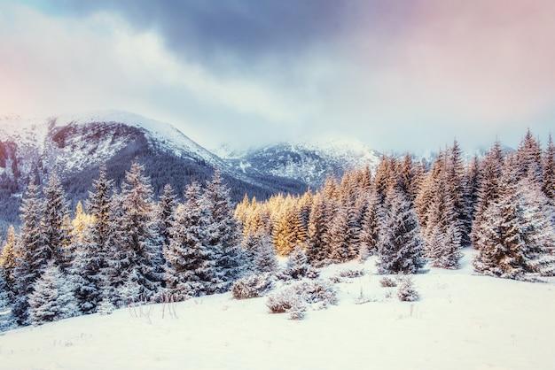 Таинственный зимний пейзаж с туманом, величественные горы