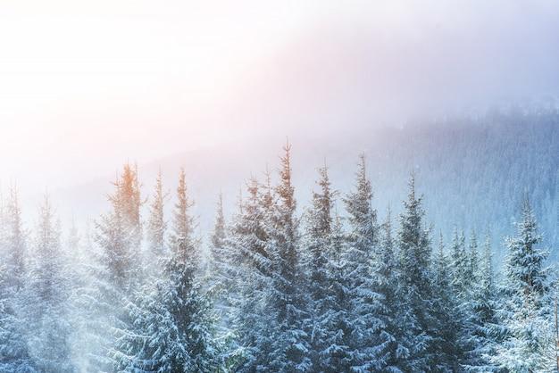 日光で輝く冬の風景。冬の劇的なシーン。