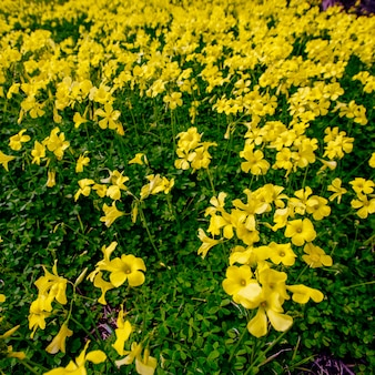 庭の黄色い花