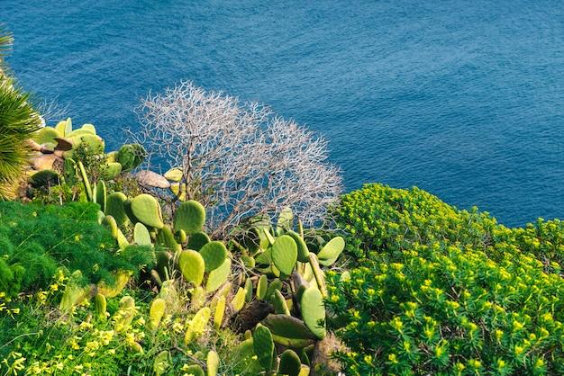 Колючий кактус у моря
