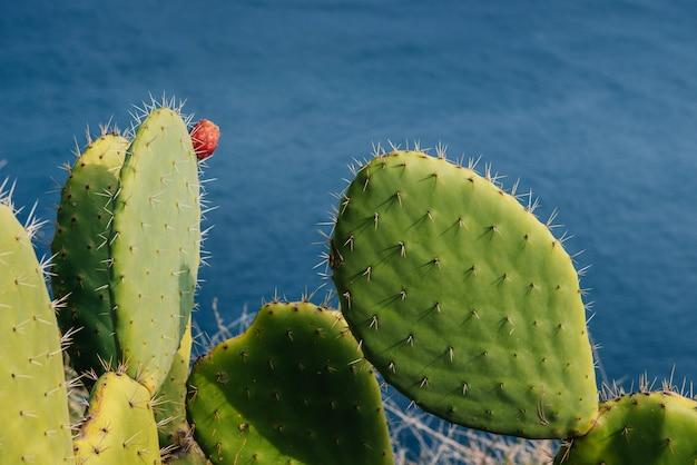 Пожилая пара колючий кактус и фрукты против воды