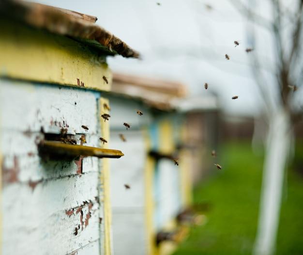 ミツバチが巣箱を飛び回る