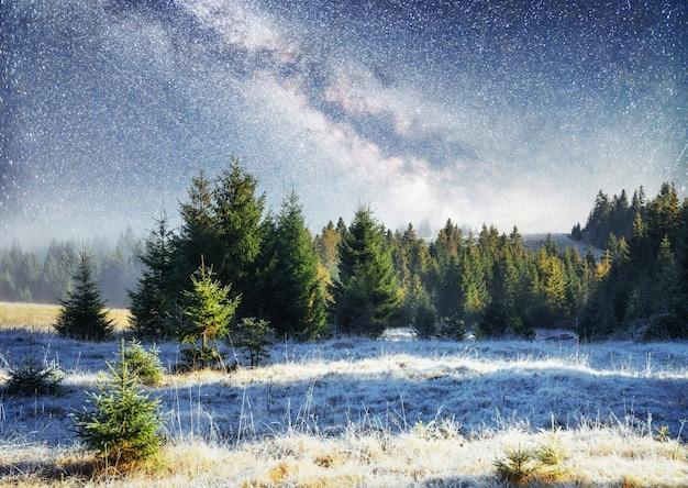 冬の森の乳製品スタートレック。ドラマチックで美しいシーン。休日を見越して。カルパティア、ウクライナ、ヨーロッパ