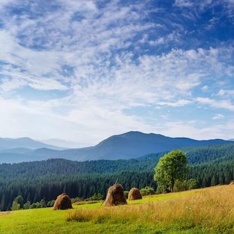Прекрасный солнечный день в горном пейзаже. карпаты, украина