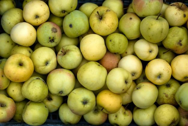 Свежий сад яблочный