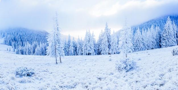 Волшебное зимнее заснеженное дерево