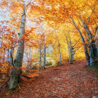 Извилистая дорога в осенний пейзаж