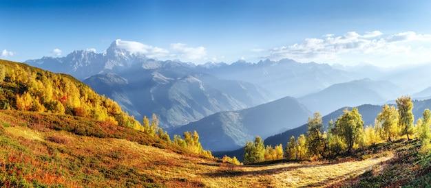 カルパティアウクライナの幻想的な森。谷には黄金色の秋があります。