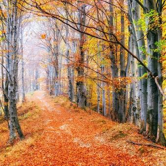 晴れた日に森の美しい景色。秋の風景。カルパチア人。ウクライナ