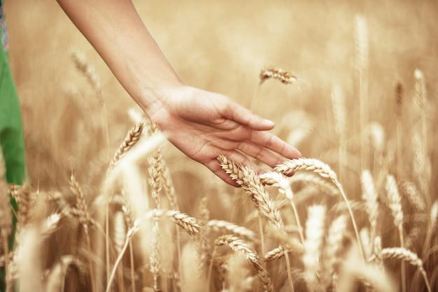 小麦の穂と手