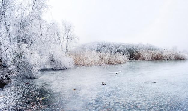 Замерзшее болотистое озеро зимой