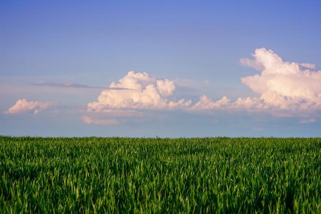 背の高い草の緑のフィールド