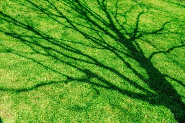 緑の草。自然な背景テクスチャ