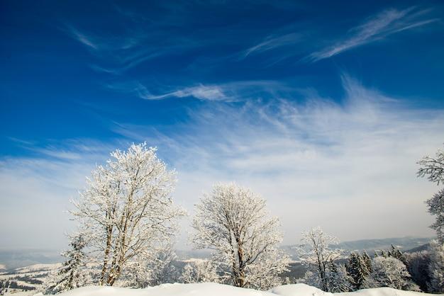 魔法の冬の雪に覆われた木