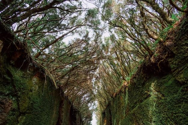 森の中の背の高い植生